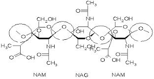 n glycosidic bond  glycosidic bond between N-acetylglucosa...